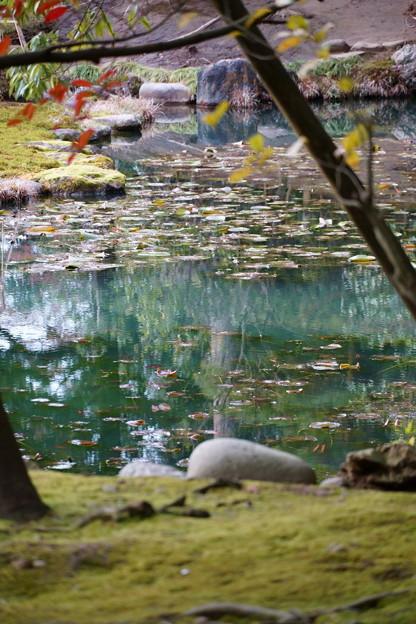 Photos: 兼六園 時雨亭の庭園