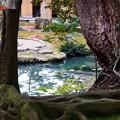写真: 兼六園 時雨亭の池