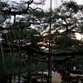 Photos: 夕暮れのお花松