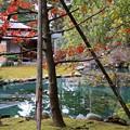 Photos: 雪のない兼六園 時雨亭の庭園