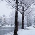 雪!゚・※*。。゚*゚。゚。*ヾ・∀・ノ*