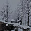 Photos: 雪のバス停 彡゚。彡゚。゜゚彡゚。彡