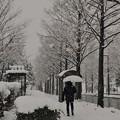 雪のバス停 ハックチョン(*´д`)・∵