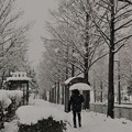 Photos: 雪のバス停 ハックチョン(*´д`)・∵