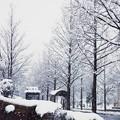 Photos: 雪のバス停