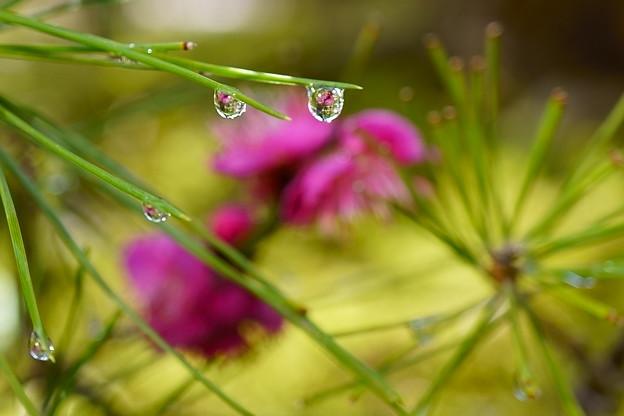 雨のプレゼント