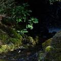 Photos: 瓢池 滝