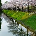 金沢城   お堀の満開の桜