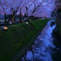 Photos: 金沢城 お堀の桜 観桜期ライトアップ