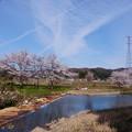 Photos: 満開の桜 十二ヶ滝の上