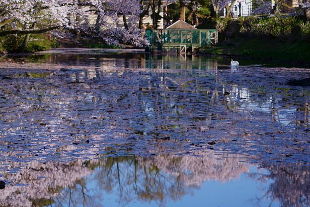 奥卯辰山健民公園 池