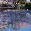 Photos: 奥卯辰山健民公園 池