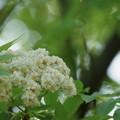 Photos: 何の木? 2