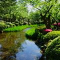 新緑の兼六園 曲水と開花を待つカキツバタ