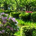 Photos: 新緑の兼六園     曲水のカキツバタとツツジ