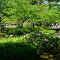 Photos: 兼六園 花見橋