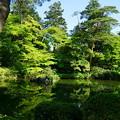 瓢池 新緑と赤松の木