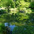 瓢池 新緑と青空