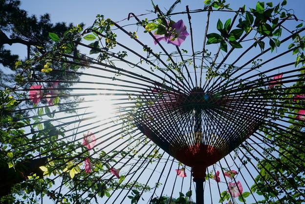 夏の野点傘(2)