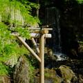 白藤と翠滝