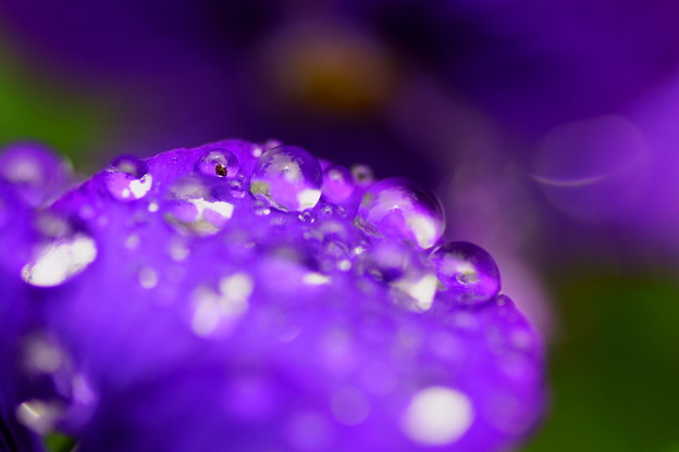 Photos: 溢れる滴
