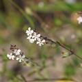 Photos: 海岸の花