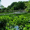 卯辰山花菖蒲園