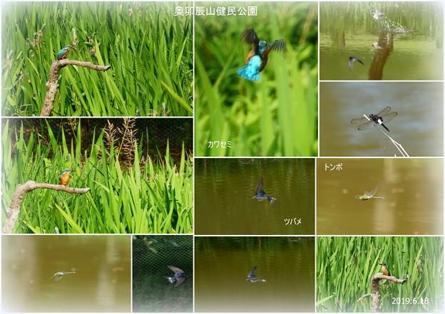 Photos: カワセミ ツバメ トンボ