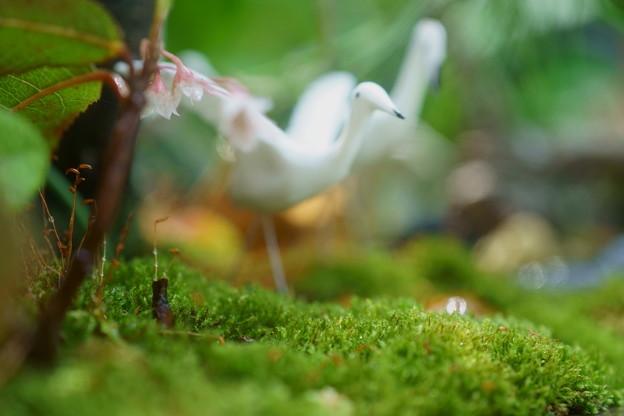 Photos: 寄せ植え 苔とヤブコウジ