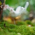 寄せ植え 苔とヤブコウジ