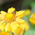 サンドリーム 蜂