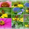 7月の花と蝶 蜂