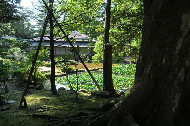 初秋の兼六園 時雨亭と庭園  池