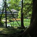 初秋の兼六園 時雨亭と庭園   池(スイレン)