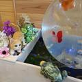Photos: 金魚 ネコ カエル