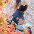 冬桜咲くころ