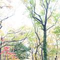 Photos: 秋