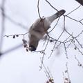 写真: P9860911-ウソ♀