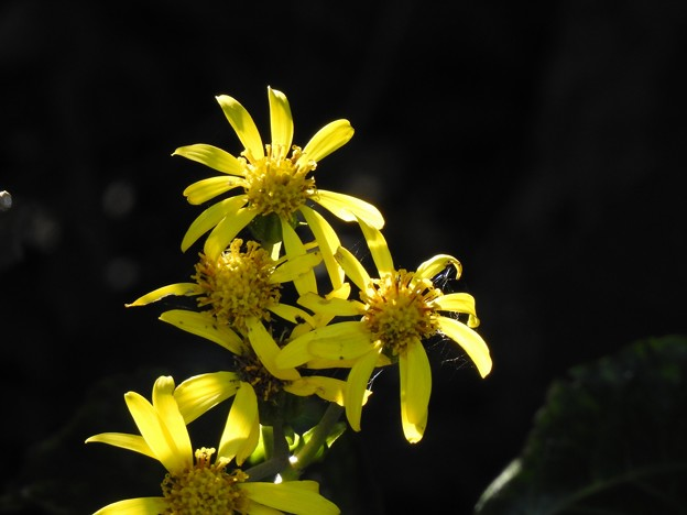 光っていた花
