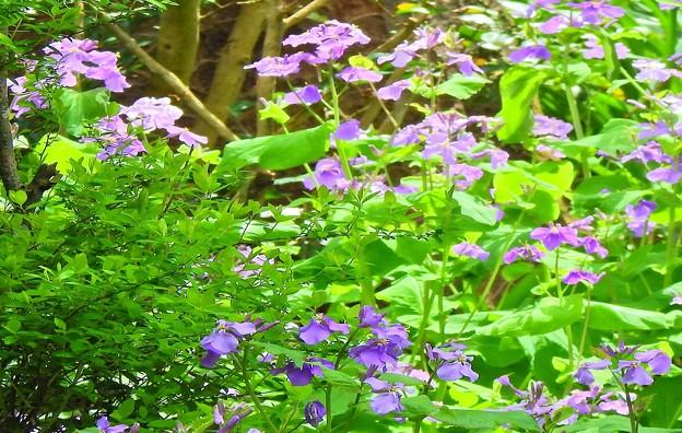 境内に咲く花