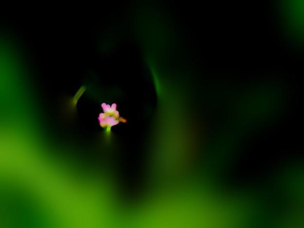 花の妖精の熱い吐息