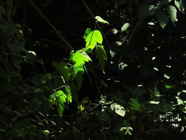 光と影の連鎖