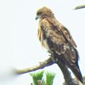 Photos: 鳥影遠景
