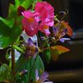 Photos: 摘み花