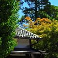 Photos: 美観紅葉(2)