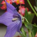 Photos: 花があった