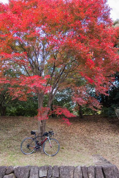 写真: 昭和記念公園-2170
