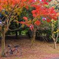 写真: 昭和記念公園-2165