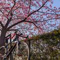 写真: 多摩湖サイクリング-0174