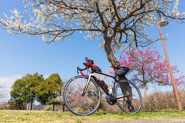 20180317サイクリング-0190